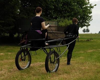 Ponygirl und Sulky