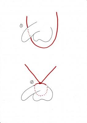 Schwanzbondage, Schritt 1 und 2