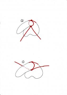 Schwanzbondage, Schritt 3 und 4